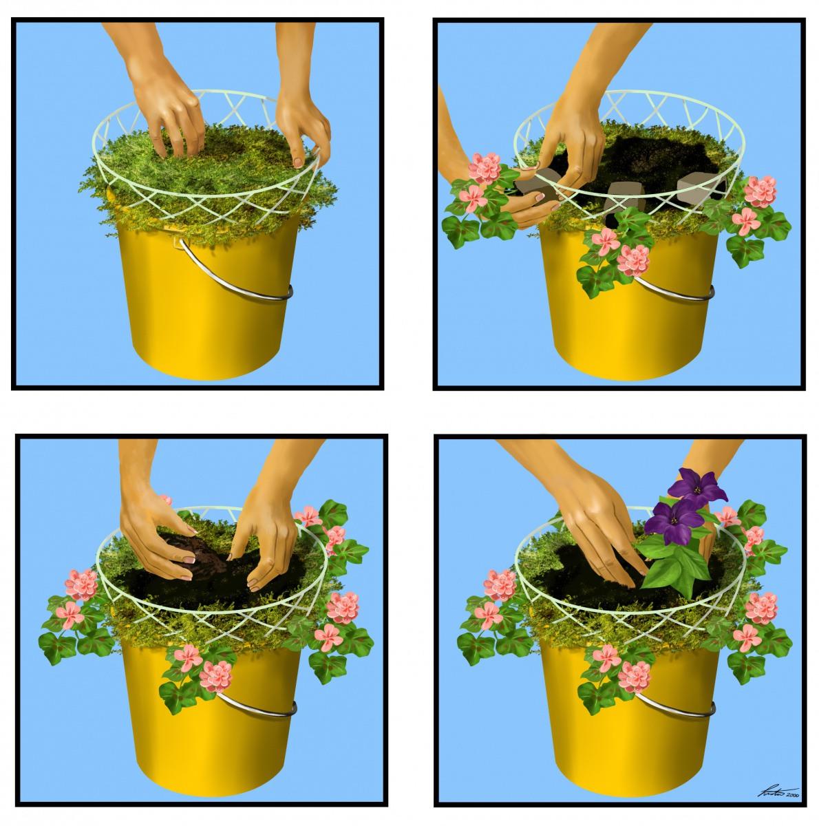 korbbepflanzen