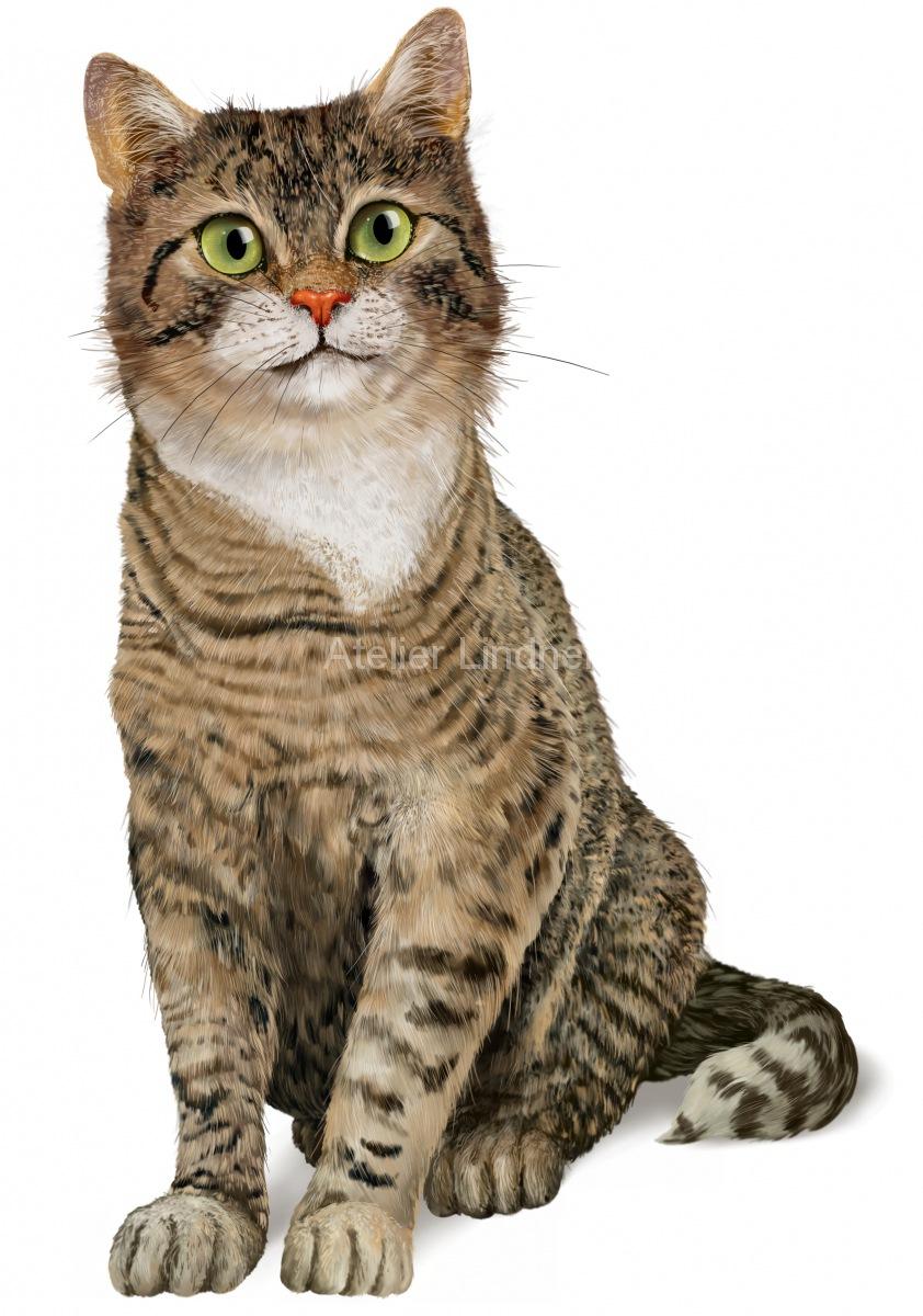 Katze-sitzend-2